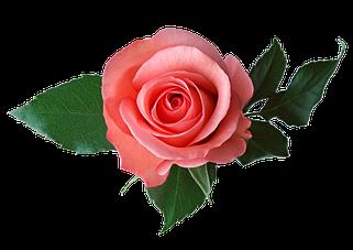 Каталог троянд Осінь 2022