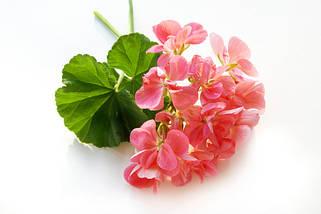 Розсада квітів