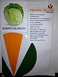 Семена капусты Глобус F1, 2500 семян, фото 2