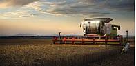 Услуги по уборке урожая зерновых, комбайнами Claas Lexion