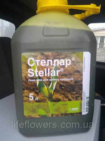 Стеллар гербіцид для кукурудзи, фото 2