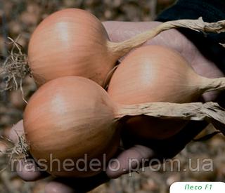 Семена лука Песо F1 250000 семян Bejo