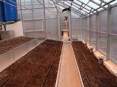 Сонячний вегетарій - геліотеплиця майбутнього?