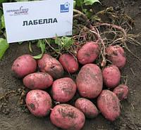 Картофель Лобелла, сетка~2,5кг