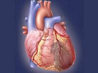 Программа профилактики сердечно-сосудистых заболеваний «Здоровое сердце, чистые сосуды»