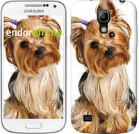"""Чехол на Samsung Galaxy S4 mini Duos GT i9192 Йоркширский терьер с хвостиком """"930c-63-783"""""""