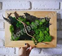 Картина з стабілізованого моху і гілок, фото 1