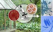 Биофунгициды от бактериальных и грибковых заболеваний с/х растений, садовых деревьев и кустов