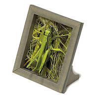 Сборная рамка из картона Умная бумага Кузнечик 245 ТМ: Умная Бумага
