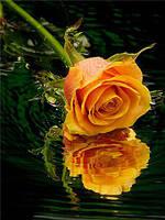 """Алмазная вышивка 5D R35х46 - набор """"Желтая роза над водой"""""""