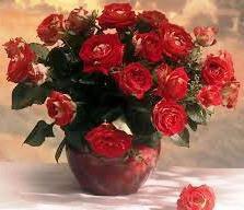 Троянди (саджанці)