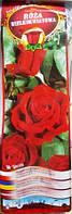 Троянда великоквіткова Mr Lincoln