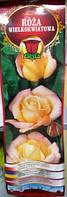 Троянда великоквіткова Peace