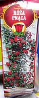 Троянда плетиста Uczucie
