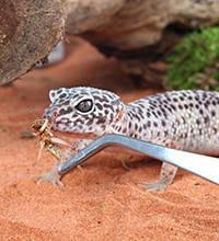 Товари для рептилій, комах, земноводних