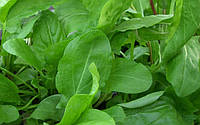 Семена щавеля Изумрудный Король (Россия), 0.2кг