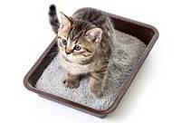 Наполнители для туалетов и туалеты для животных