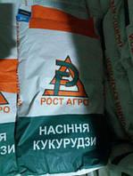 Семена кукурузы Аджамка ФАО 310