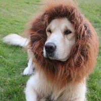 Lovoyager LVC1727 Принадлежности для украшения для льва для собак ОДНО SZIE