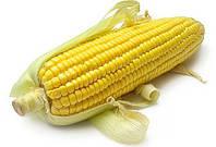 Семена кукурузы насіння кукурудзи гібрид Зоряна (ФАО 190) F1