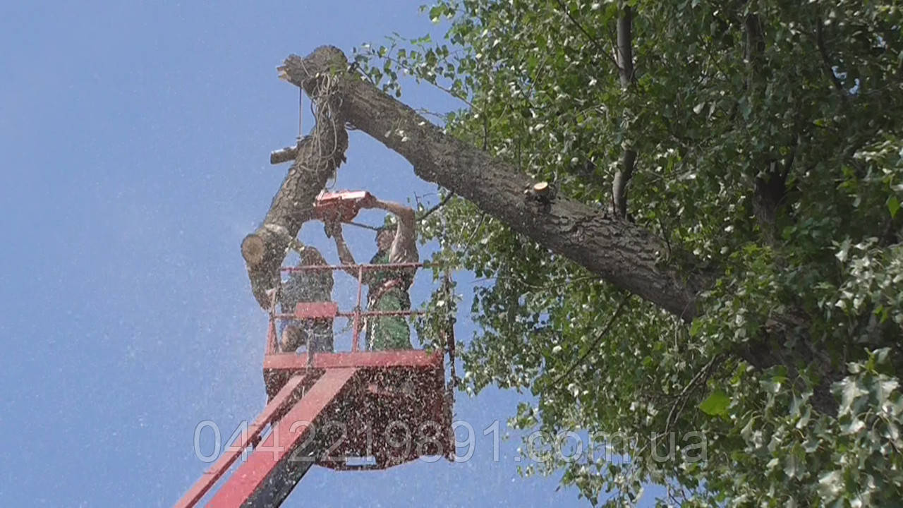 Срезать дерево Спилить дерево на кладбище Спилить дерево на участке