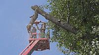 Срезать дерево Спилить дерево на кладбище Спилить дерево на участке, фото 1