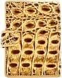 Визитница унисекс кожаная WANLIMA (ВАНЛИМА) W50080150457-cream, фото 2