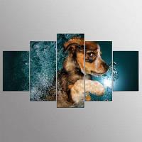 YSDAFEN 5 шт Пограничная колли собака Смазливая живопись животных холст для гостиной стены искусства 30x40cмx2+30x60cмx2+30x80cмx1