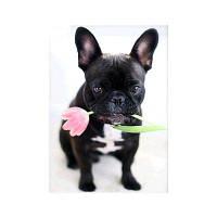 Naiyue 9922 Rose Dog Печать алмазной живописи черно-белый