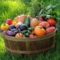 Семена овощей ТМ Яскрава. Лучшая цена