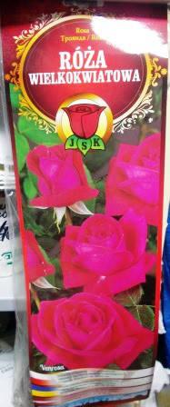 Троянда великоквіткова Venrosa