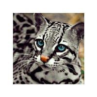 Naiyue S215 Малый леопардовый рисунок для рисования алмазов Цветной