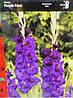 Гладіолус Purple Flora