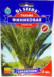 Пальма фінікова Канарська 3н (GL Seeds)