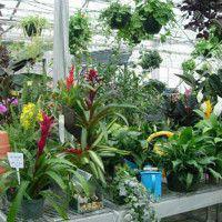 Горшечные растения из Голландии