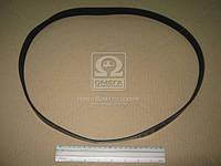 Ремень поликлиновый 6PK1165 (производство DONGIL) (арт. 6PK1165), AAHZX