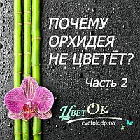 Почему орхидея не цветет? Часть 2