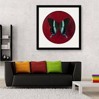 Специальная конструкция Каркасные картины Большая бабочка Печать 12 x 12 дюйма (30cм x 30cм)