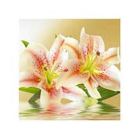 Naiyue 7148 Чертеж для рисования с лилиями Цветной