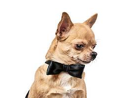 Аксессуар Pet Fashion Бабочка для собак S