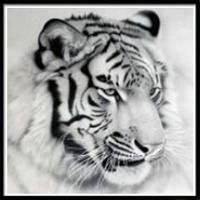 NAIYUE K025 Животный тигр Печатная нить Алмазная живопись 5d Алмазная вышивка черно-белый
