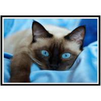 NAIYUE 9469 Живопись кошки для рисования Алмазная живопись Алмазная вышивка Чёрный