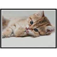 NAIYUE 9419 Кошачий павлин Print Draw Алмазная живопись Алмазная вышивка Цветной