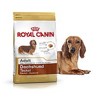 Royal Canin Dachshund Adult 1,5 кг для взрослых собак породы такса