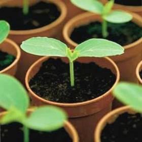 Пора висівати насіння