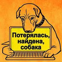 Каждая третья собака в течение своей жизни минимум один раз теряется!