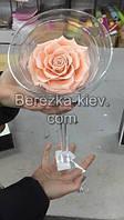 Стабилизированная роза ХХХL в бокале (кремовая), фото 1