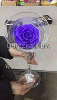 Стабилизированная роза ХХХL в бокале (синяя)