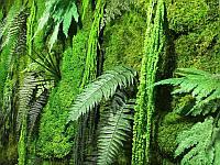 Декорирование стабилизированными растениями