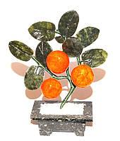 Дерево-мандарин 3 плода